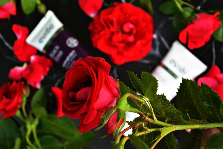 różana pielęgnacja